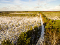 Aerial view of snowy forest in sunny winter day Stock Image