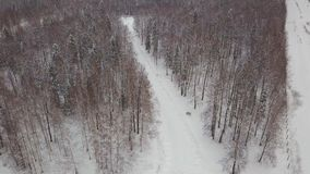 Aerial view of snowy pine trees and a little meandering stream. Clip. Aerial view of winter forest covered in snow stock image