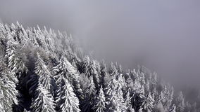 Aerial view of snowy trees in the winter time. Footage ends in haze stock video