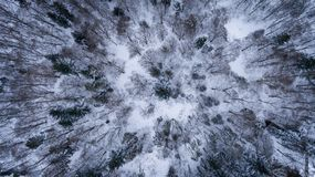 Aerial view on the snowy trees in winter time. royalty free stock images