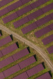 Aerial view of solar power plant Stock Images