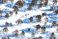 Woodland in winter day, view from above Royalty Free Stock Photo