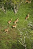 Aerial view of spotted deer. Stock Photo