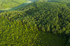 Aerial view of spring forest Royalty Free Stock Photography