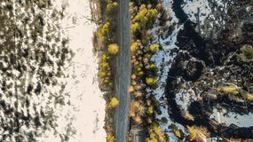 Aerial view of spring rural road in yellow pine forest with melting ice lake stock photos