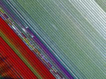 Aerial view of striped and colorful tulip field in the Noordoostpolder municipality, Flevoland. Netherlands Stock Photography