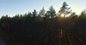 Aerial view of sunlight over trees in a pine forest at sunset.