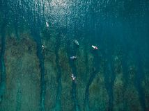 Aerial view of surfers in sea. Surfing in ocean. Top view Stock Images
