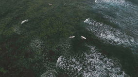 Aerial view surfers on the waves.Catanduanes, Philippines. stock video