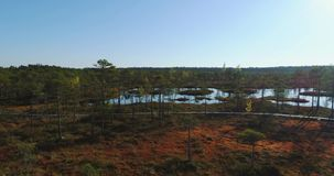 Aerial view of the wetlands swamp. Beautiful nature landscape. stock video footage