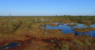 Aerial view of the wetlands swamp. Beautiful nature landscape. stock video
