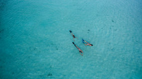 Aerial view of swimmers