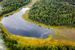 Aerial view of taiga forest and lake. In Alaska Stock Image