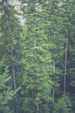 Aerial View of Tall Trees in the Woods Royalty Free Stock Image