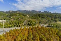 Aerial view of the Taxodium distichum in fall color with red with orange leaves royalty free stock image