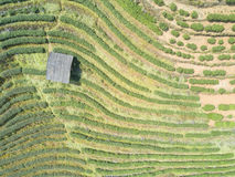Aerial view of tea plantation and a small house in Thailand Stock Image
