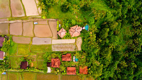 Aerial view terraces filled with water and ready for planting rice. Bali, Indonesia stock image