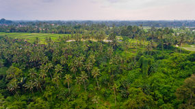 Aerial view terraces filled with water and ready for planting rice. Ubud, Bali, Indonesia royalty free stock photography