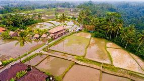 Aerial view terraces filled with water and ready for planting rice. Ubud, Bali, Indonesia stock images