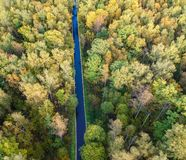 Aerial view of thick forest in autumn stock images