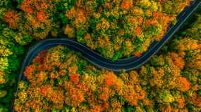 Aerial view of thick forest in autumn with road cutting through. It Stock Image
