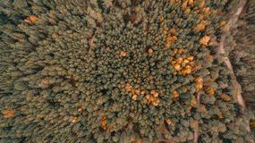 Aerial view of thick forest in autumn with road cutting through royalty free stock photos