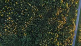 Aerial view to forest and car driving on road stock video footage