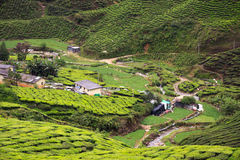Aerial view to tea plantation Stock Images