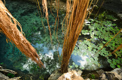 Aerial view to turquoise water lagoon in X-Batun cenote Stock Image