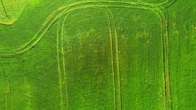 Aerial view top. Flying over a field of green wheat on a bright Sunny day. Flying over the road where passing cars stock footage