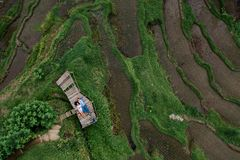 Aerial view on top. Two lovers of young people lie on a wooden bridge. Happy couple traveling at Bali, rice terraces of stock photos