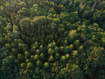 Aerial view top view of green trees forrest Royalty Free Stock Image