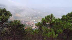 Aerial view pine treetop on slope of mountain in mist. Aerial view town in mountain with forest and clouds. Drone moving near pine treetop and showing landscape stock video footage