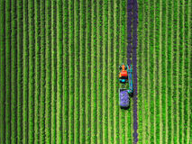 Aerial view of Tractor harvesting field of lavender.  Royalty Free Stock Photography