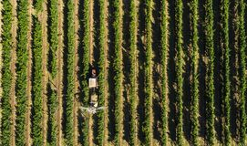 Aerial view of a tractor harvesting grapes in a vineyard. Farmer spraying grape vines with tractor.  royalty free stock images