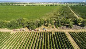 Aerial view of a tractor harvesting grapes in a vineyard. Farmer spraying grape vines with tractor.  royalty free stock photography
