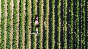 Aerial view of a tractor harvesting grapes in a vineyard. Farmer spraying grape vines with tractor.  royalty free stock photos
