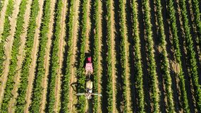 Aerial view of a tractor harvesting grapes in a vineyard. Farmer spraying grape vines with tractor.  royalty free stock image