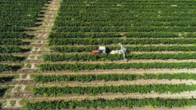 Aerial view of a tractor harvesting grapes in a vineyard. Farmer spraying grape vines with tractor.  stock photography