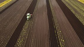Tractor cultivates the land in the field. Aerial view Tractor Hilling Potatoes with disc hiller. Farmer in tractor preparing land with seedbed cultivator in stock video footage