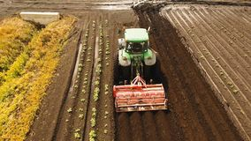 Tractor cultivates the land in the field. Aerial view Tractor Hilling Potatoes with disc hiller. Farmer in tractor preparing land with seedbed cultivator in Royalty Free Stock Photo