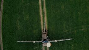 Aerial view of tractor spraying wheat field in move. Top view