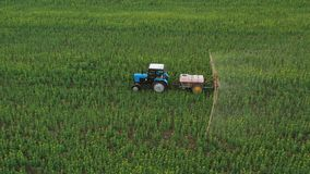 Aerial view of tractor treats agricultural plants on the field. Tractor treats agricultural plants on the field, top view from height stock footage