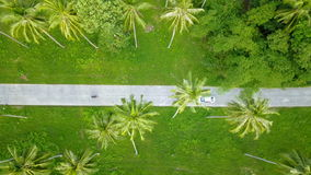 Aerial View of Transport Driving Across Palm Tree Grove stock footage