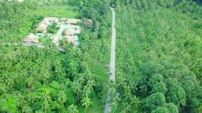Aerial View of Transport Moving along the Road across Coconut Palm Tree Plantation. Shot with DJI Mavic fps 29,97 4k stock video footage