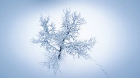 Aerial view on tree covered with ice and snow. stock image