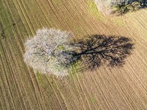 Aerial view of a tree in a plowed field, Royalty Free Stock Photo