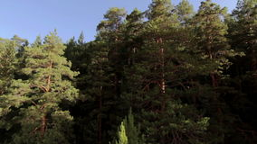 Aerial view of the tree tops stock footage
