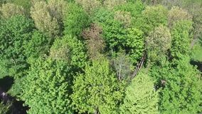 Aerial view on tree tops. A collection of Aerial shots of tree tops stock video