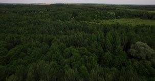Aerial view on tree tops of a deep forest. On a summer day stock footage